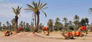 La_Palmeraie_de_Marrakech_709-1024x468
